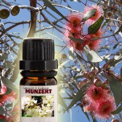 Ätherisches Öl Eukalyptus von Gewürzversand Munzert